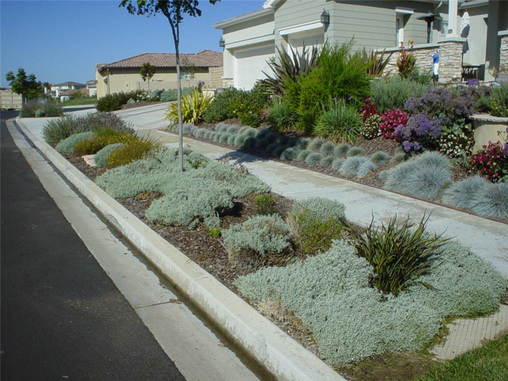 Parking strip snow in summer for Backyard landscaping plants
